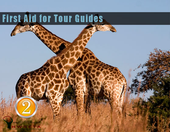 First Aid Training for Tour Guides